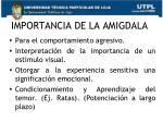 importancia de la amigdala