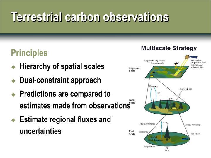 Terrestrial carbon observations