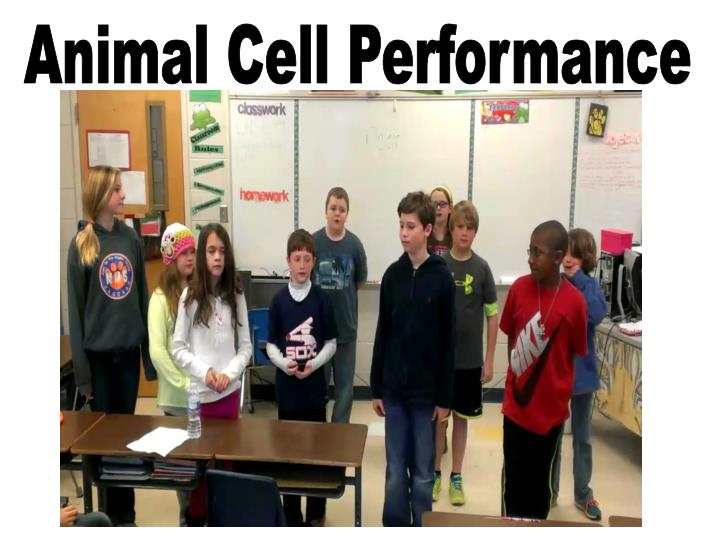 Animal Cell Performance