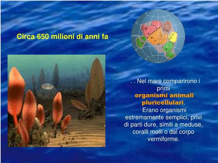 Circa 650 milioni di anni fa