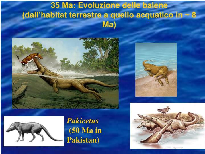 35 Ma: Evoluzione delle balene