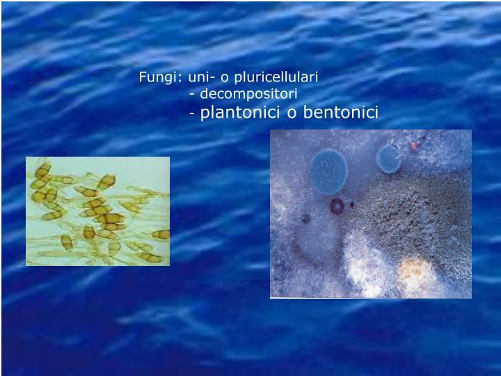 Fungi: uni- o pluricellulari
