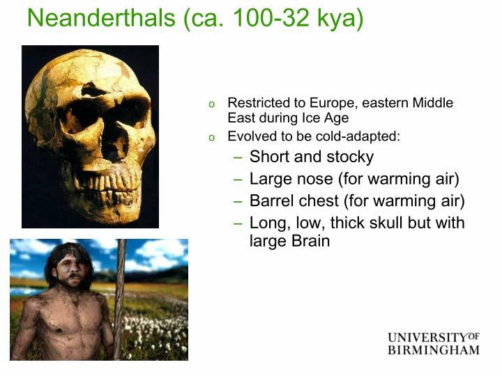 Neanderthals (ca. 100-32 kya)