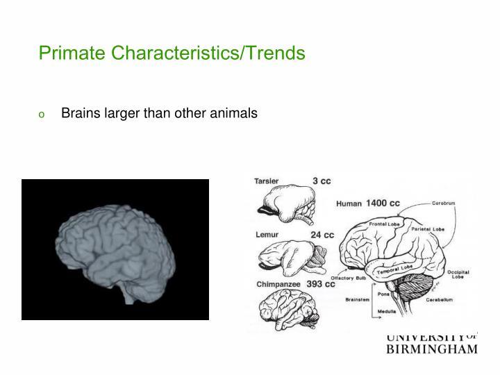Primate Characteristics/Trends