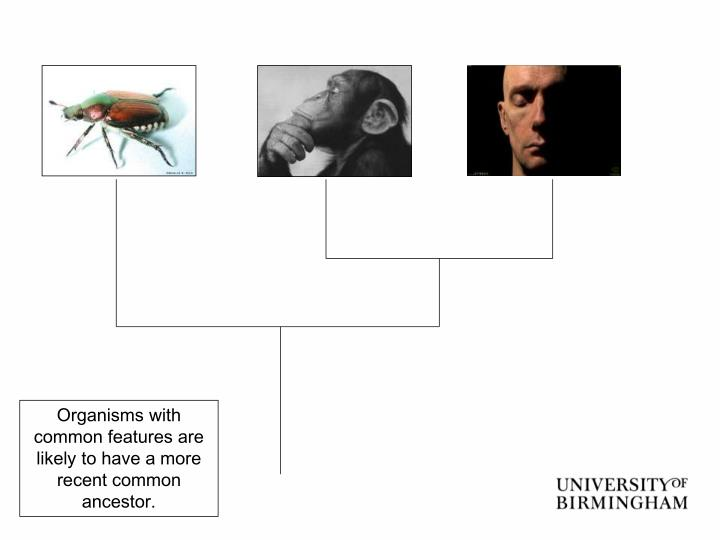 Organisms with common features are likely to have a more recent common ancestor.