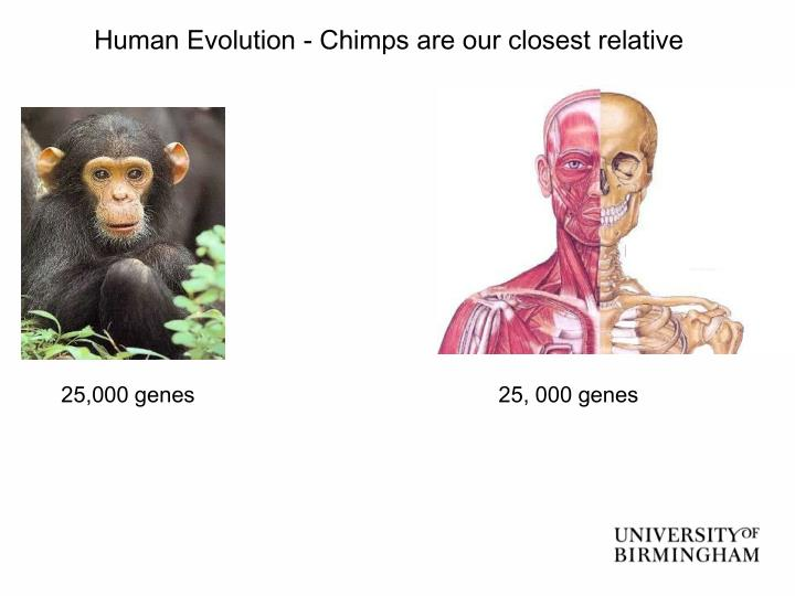 Human Evolution - Chimps are our closest relative