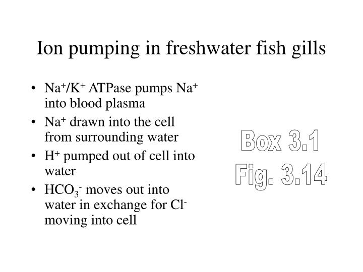 Ion pumping in freshwater fish gills
