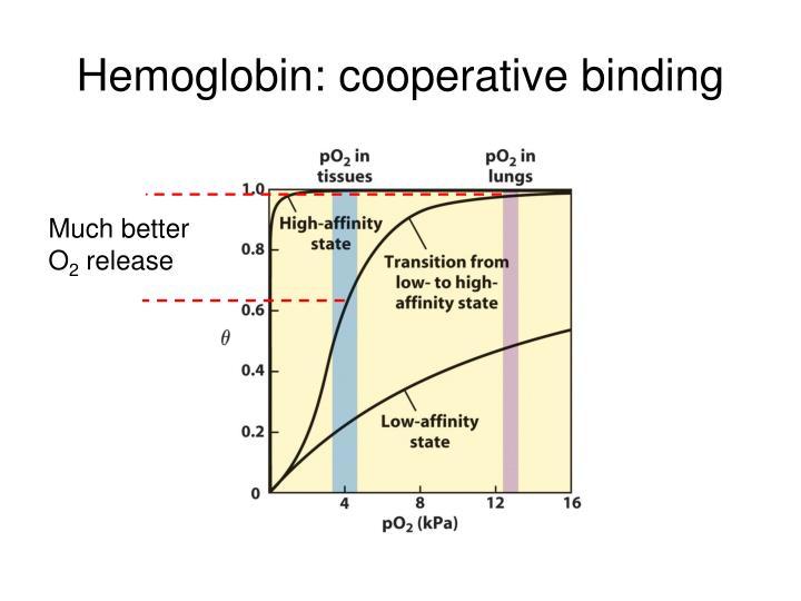 Hemoglobin: cooperative binding