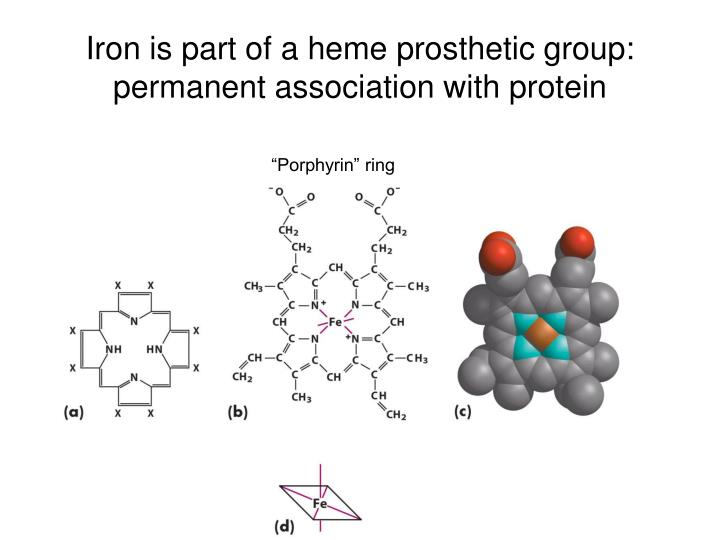 Iron is part of a heme prosthetic group: permanent association with protein