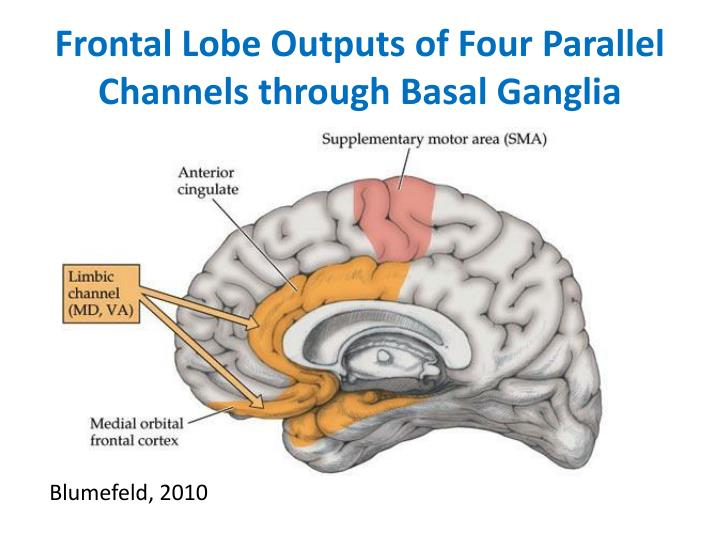 Frontal Lobe Outputs of Four Parallel Channels through Basal Ganglia