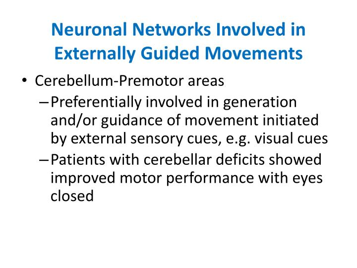 Neuronal Networks Involved in Externally Guided Movements