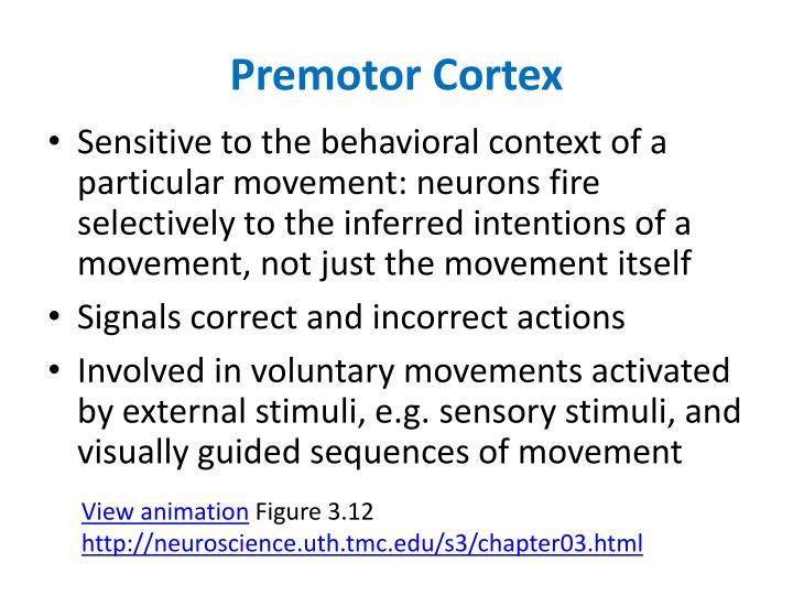Premotor Cortex