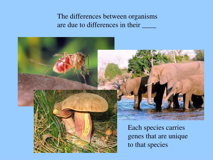The differences between organisms are due to differences in their ____