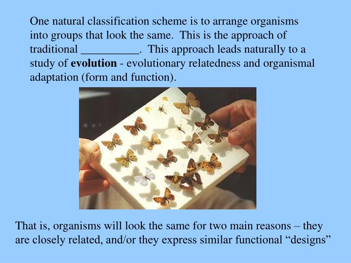 One natural classification scheme is to arrange organisms into groups that look the same.  This is the approach of traditional