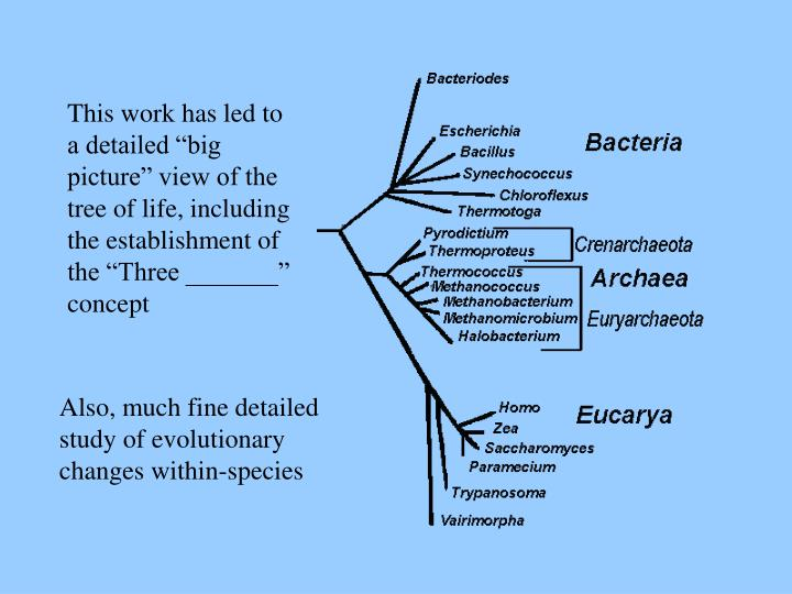"""This work has led to a detailed """"big picture"""" view of the tree of life, including the establishment of the """"Three _______"""" concept"""