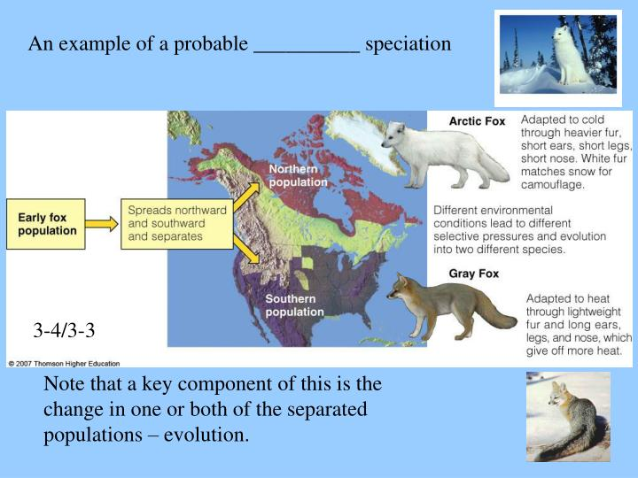 An example of a probable __________ speciation