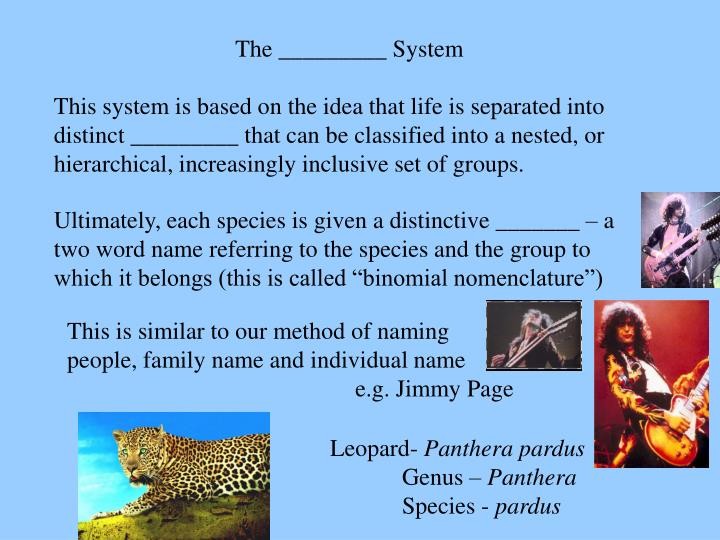 The _________ System