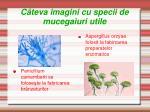 c teva imagini cu specii de mucegaiuri utile