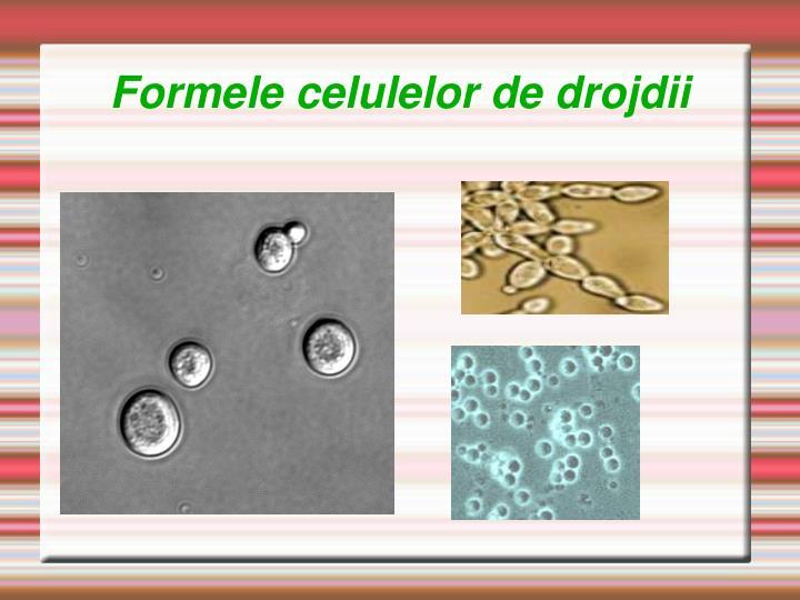 Formele celulelor de drojdii