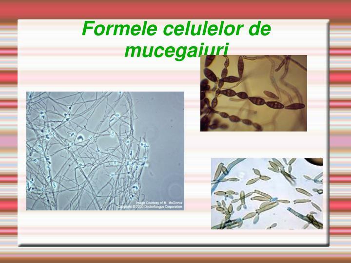 Formele celulelor de mucegaiuri