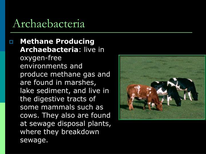 Methane Producing Archaebacteria