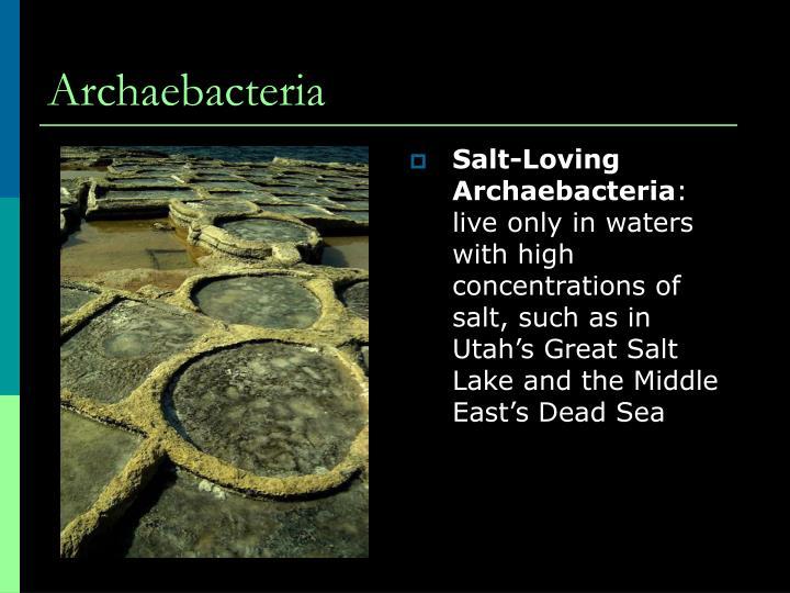 Salt-Loving Archaebacteria