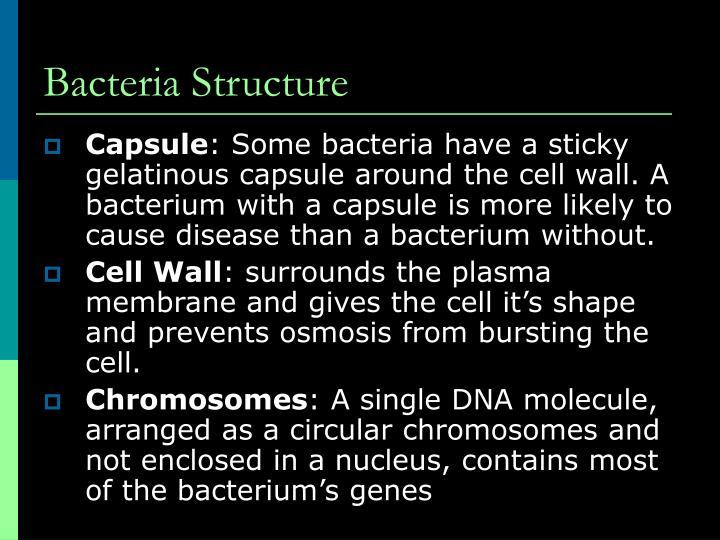 Bacteria Structure