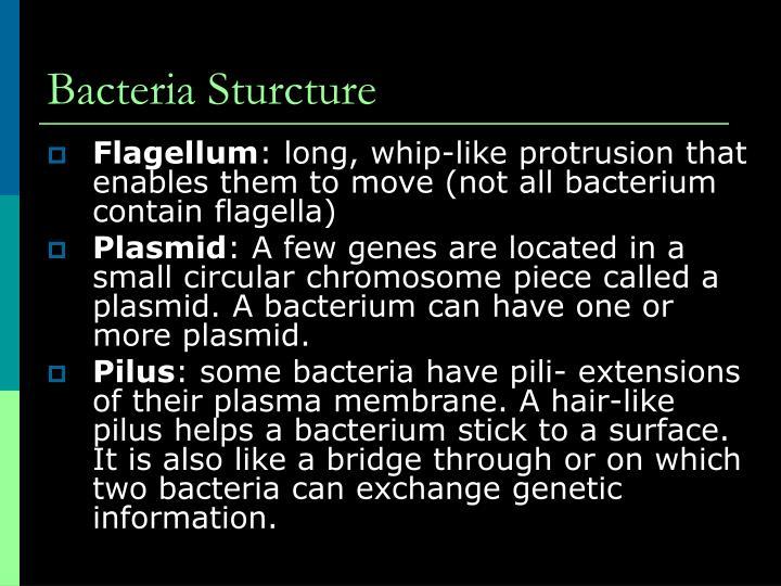 Bacteria Sturcture