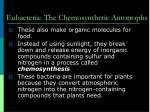eubacteria the chemosynthetic autotrophs