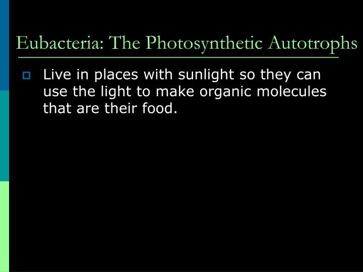Eubacteria: The Photosynthetic Autotrophs
