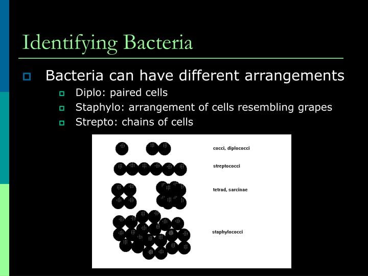 Identifying Bacteria