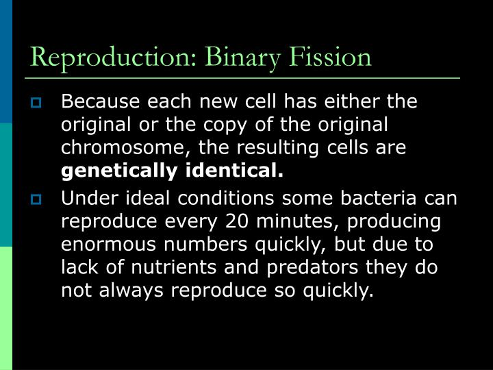 Reproduction: Binary Fission