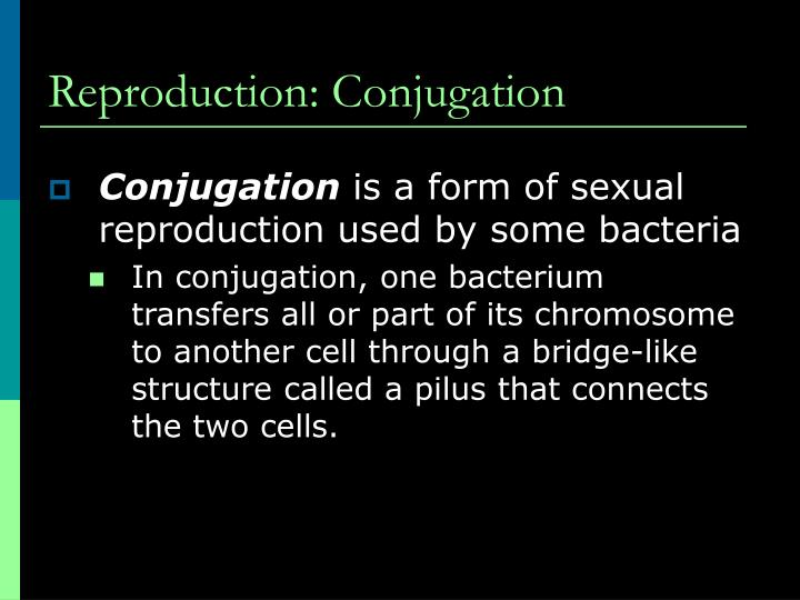 Reproduction: Conjugation