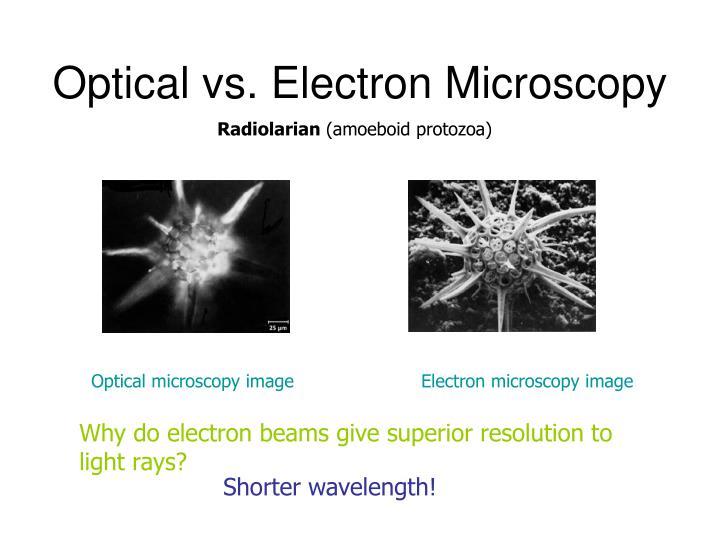 Optical vs. Electron Microscopy