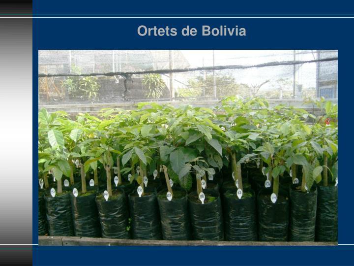 Ortets de Bolivia
