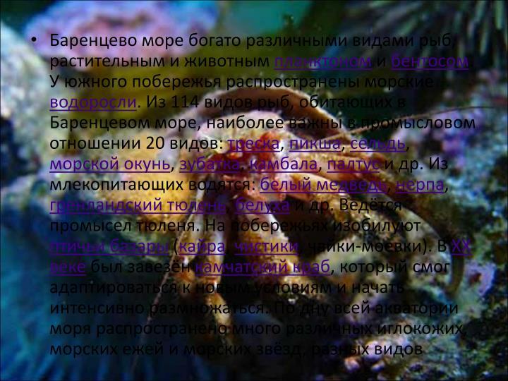 Баренцево море богато различными видами рыб, растительным и животным