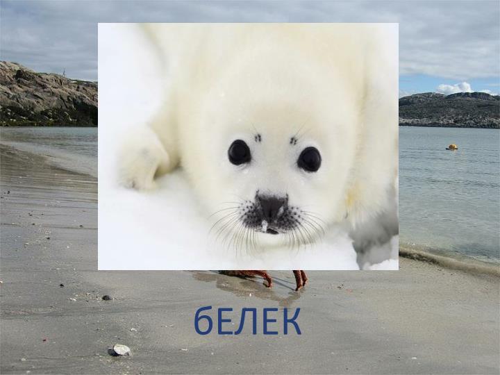 бЕЛЕК