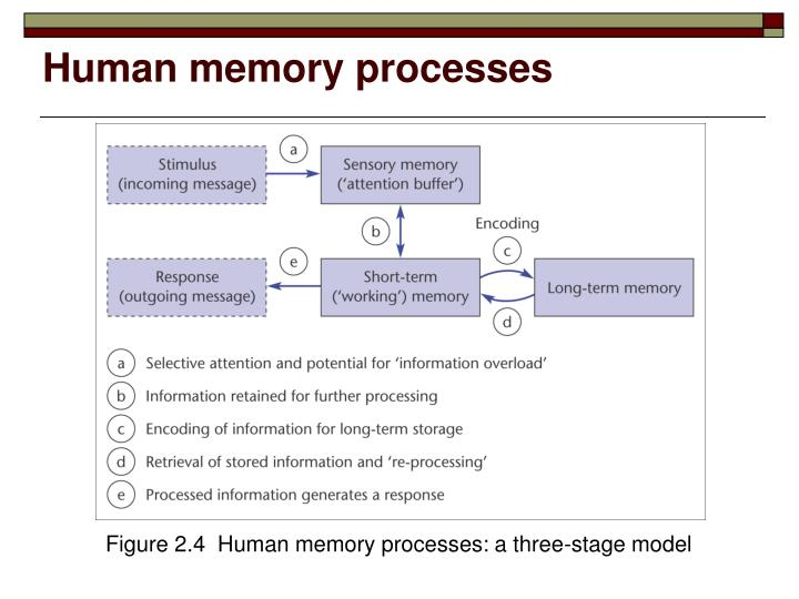 Human memory processes