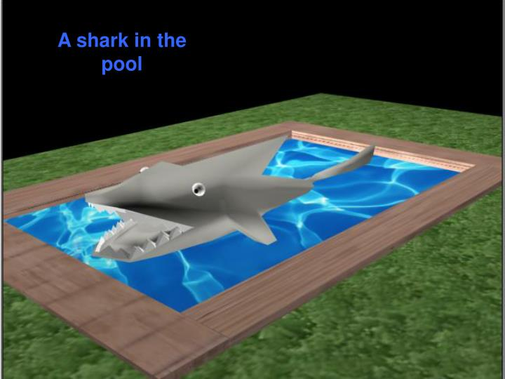 A shark in the pool