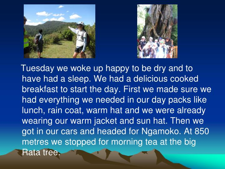 Tuesday we woke up happy to be dry and to have had a sleep. We had a delicious cooked breakfast to start the day. First we made sure we had everything we needed in our day packs like lunch, rain coat, warm hat and we were already wearing our warm jacket and sun hat. Then we got in our cars and headed for Ngamoko. At 850 metres we stopped for morning tea at the big Rata tree.