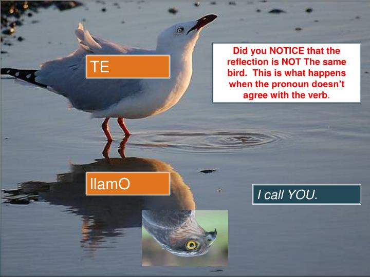 Did you NOTICE that the reflection is NOT The same bird.  This is what happens when the pronoun doesn't agree with the verb