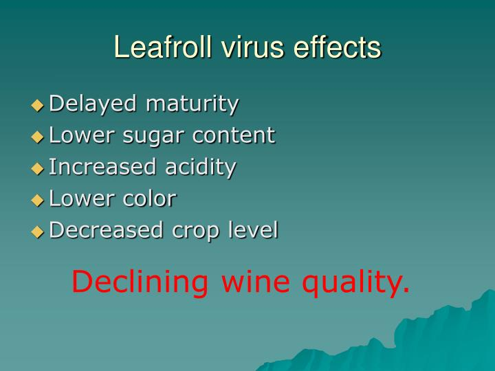 Leafroll virus effects