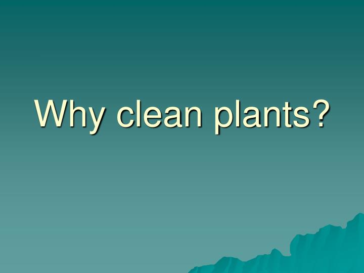 Why clean plants?