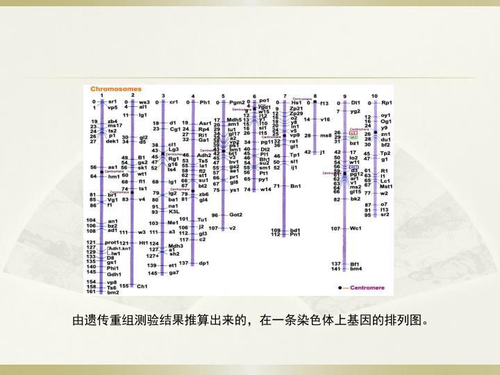 由遗传重组测验结果推算出来的,在一条染色体上基因的排列图。