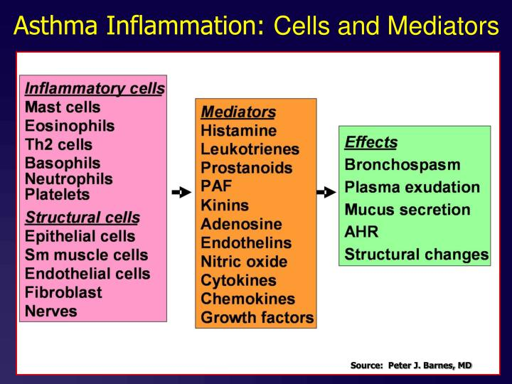Asthma Inflammation: