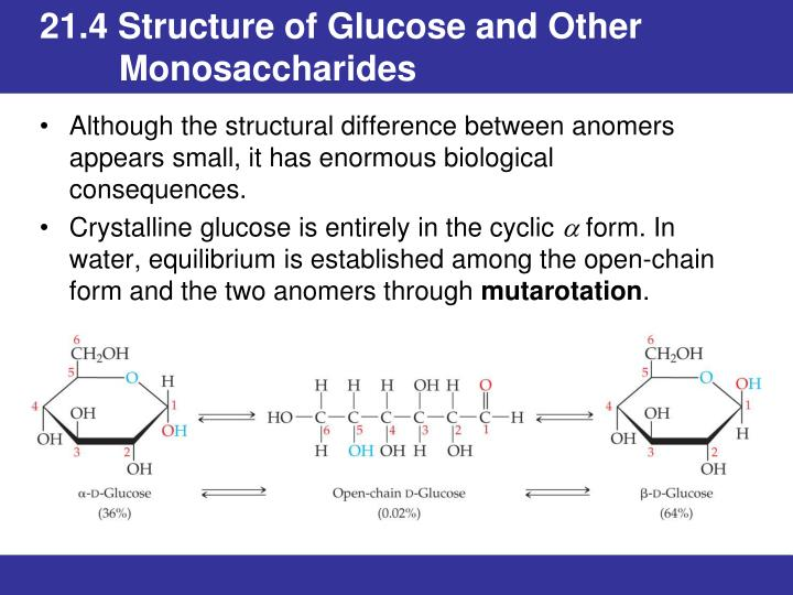 21.4 Structure of Glucose and Other 	Monosaccharides