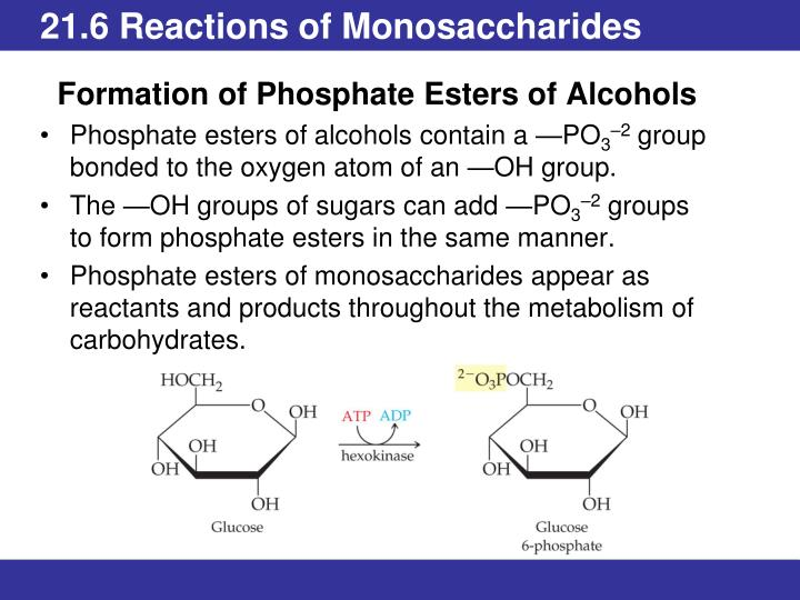 21.6 Reactions of Monosaccharides
