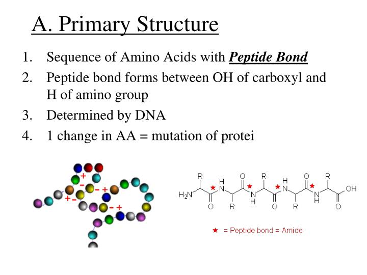 A. Primary Structure