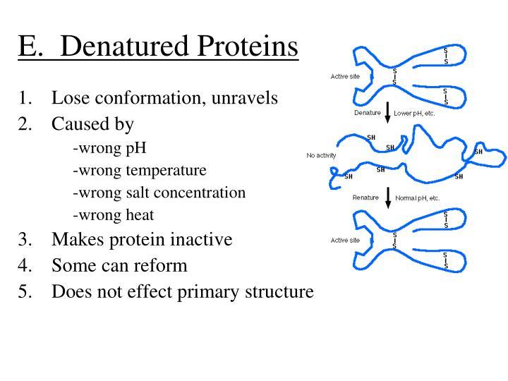 E.  Denatured Proteins