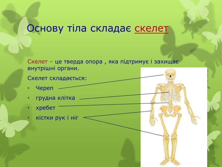 Основу тіла складає